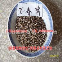 供应万寿菊种子 万寿菊种子价格 万寿菊新种子(花卉种子发芽率95%)