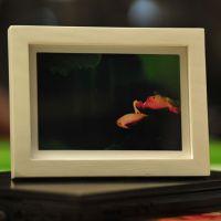 爱拉屋特价高端相框多尺多色照片框 组合相架创意实木框 厂家批发