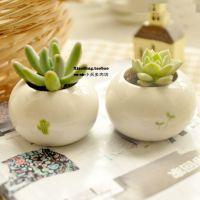 zakka花器 (小芽儿盆栽) 小芽儿仙人掌混装 迷你创意陶瓷花盆