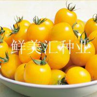 水果番茄种子——晴美