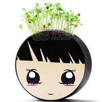 小花迷青草种植迷你植物盆栽/草娃娃-超级剩女