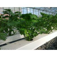 供应供应高新休闲观光生态农业无土栽培展示新型绿色环保种植技术