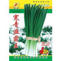 供应韭菜新品种---寒青韭霸王F1种子