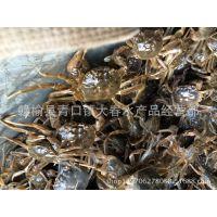 长年出售正宗长江系大闸蟹蟹苗 (50只~60只)/斤  螃蟹苗