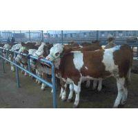 吉林肉牛养殖场吉林肉牛市场吉林肉牛基地吉林肉牛网