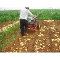 厂家供优质高效土豆收获机 花生收获机 大蒜收获机 小型农机 农