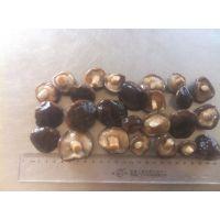 河北供应盐渍香菇,出口内销,数量稳定,常年供应。