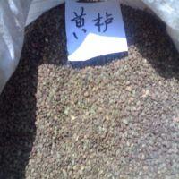 当年新采苗木树种 黄栌种子 特价销售 量大优惠 花卉种子