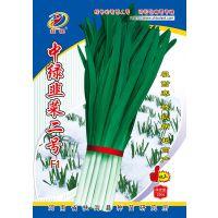 供应韭菜新品种---中绿韭菜二号F1种子