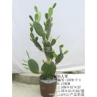 供应仿真组合仙人掌盆栽 仿真热带植物,仿真仙人刺