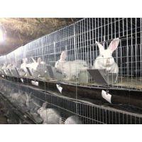 推荐兴博兔子繁殖养殖用镀锌钢丝焊接3层12位子母兔兔笼
