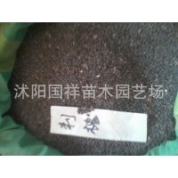 常年供应优质绿化苗木,刺槐种子,价格咨询,特价销售
