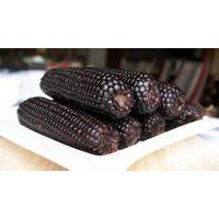 批发富硒黑玉米种子