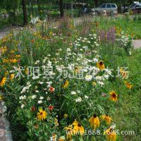 批发野花组合种子 野花种子直销 道路庭院景观组合 易管理 草坪种
