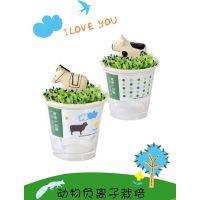 办公室内植物种子 水生植物 盆栽肥料 花种子 动物负离子水栽培