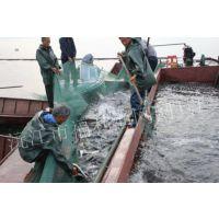 抬网|捕鱼网|捕鱼抬网|充气抬网|捕鱼网箱|沉浮式捕鱼装置