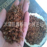 【卖风了!】红油香椿种子价格 香椿芽苗菜种子 香椿种子发芽批发