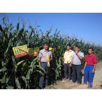 鼎优农业 玉米种子 HE-2 高产抗病