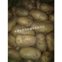 供应黑龙江马铃薯