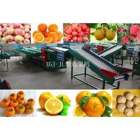 供应梨选果机分选梨大小的机器,蜜梨自动分选处理设备,双线蜜梨选果机