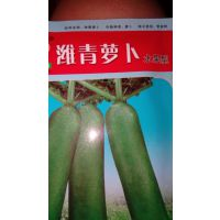 供应水果型青萝卜种子