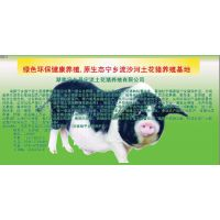 湖南宁乡优良土花仔猪肉肥而不腻厂家报价