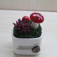 批发绿植盆栽 迷你植物花卉 桌面小摆件 办公室微型盆景