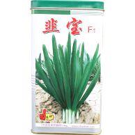 供应速生韭菜新品种---韭宝F1种子