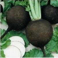 进口保健蔬菜种子套餐订购批发销售黑珍珠樱桃萝卜种子