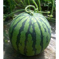 西瓜种子——六太郎