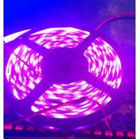 供应30灯每米12v 紫光灯带