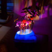 厂家直销 梦幻创意LED盆景小夜灯 感应式迷你宝宝智能光控灯