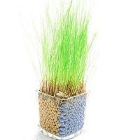创意迷你盆栽 DIY种植 陶碳球负离子防辐射 睛思草系列 厂家直销