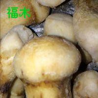 云南特级野生松茸菌 新鲜冷冻松茸 速冻美味松茸 佳肴原色松茸
