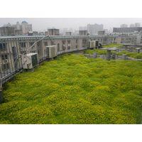 供应有氧墙体绿化/#¥生态植物墙