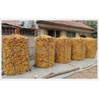 供应圈玉米网现货供应厂家直销