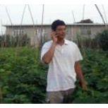 紫王葡萄苗供应昌黎正源葡萄良种基地紫王葡萄苗价格低质量优