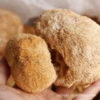 批发干猴头蘑菇 特级猴头菇 猴头菇价格 东北猴头菇
