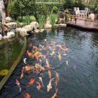 庭院鱼池风水 价位合理的庭院鱼池哪里买