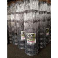 1.65M宽12根横丝拧编而成的草原隔离网/热镀锌草原铁丝网
