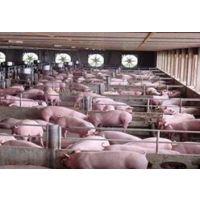 畜禽粪便处理方法和畜禽粪便处理设备的简介 13939253735