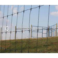 供应内蒙古牧区养殖网生产专家、草地退化的救星