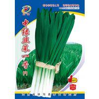 供应韭菜新品种----中绿韭菜一号F1种子