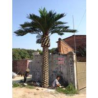 浩宇专业定制中东海藻树 保鲜棕榈树 仿真热带植物树阿里热卖