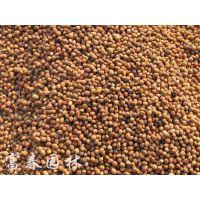 供应优质毛桃核、毛桃种子、山桃核、山桃种子