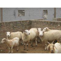 2015年养殖肉牛肉羊计划肉驴养殖效益分析