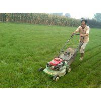 草坪陕西绿化用草坪卷周至草皮种植基地三森草坪供应基地