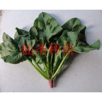 进口菠菜种子 圆叶厚叶 抗病高产 寿光蔬菜种子 大面积种植