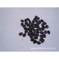 慈溪产丝瓜种子 专产粗大密的丝瓜络种子 农户一手精选优级良种