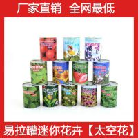 铁罐花卉 易拉罐迷你花卉  热销江湖产品 神奇魔种 太空花